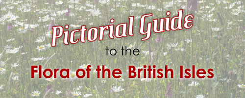 Pictorial Guide to the Flora of the British Isles